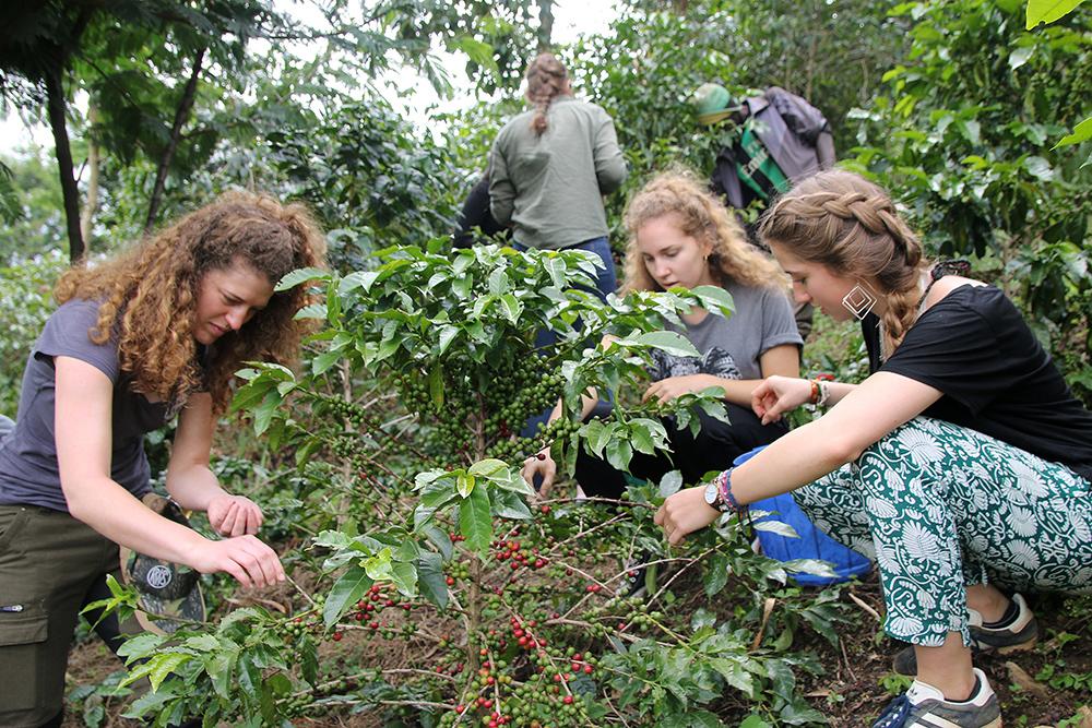 Die Schülerinnen inspizieren die Kaffeepflanzen.